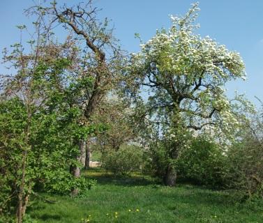 Obstgarten Marme-Lädle